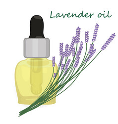Lavender essential oil vector