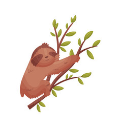 Brown sloth on a branch on vector