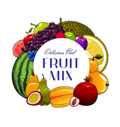 Exotic fruits and berries apple mango and feijoa vector