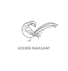 Golden pheasant outline icon vector