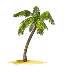 palm tree hand drawn painted vector image