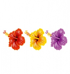 set of hibiscus vector image vector image