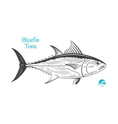 Bluefin tuna hand-drawn vector