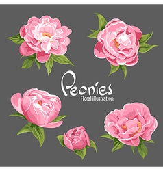 Fragrant peonies vector