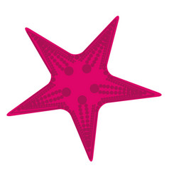 white background with purple starfish vector image