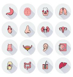 internal human organs icons set vector image vector image