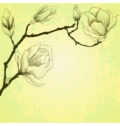 Spring background with magnolia flowers vector image vector image