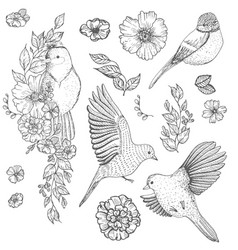 Set of of birds and flowers vector