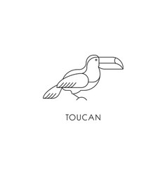 toucan outline icon vector image