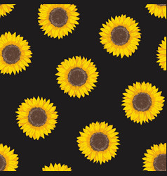Botanical seamless pattern with sunflower heads vector