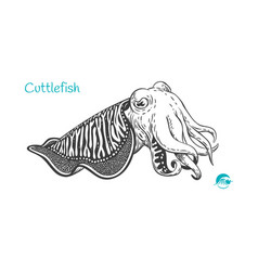 Cuttlefish hand-drawn vector