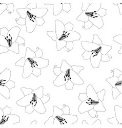 Lily outline white background vector