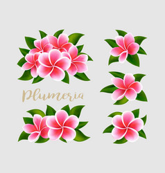 realistic white pink plumeria frangipani flowers vector image