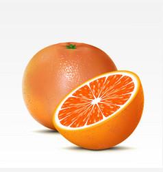 grapefruit vector image vector image