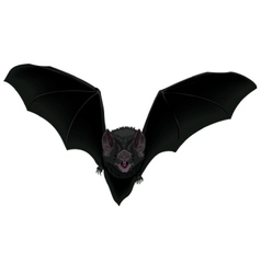 Flying Bat vector