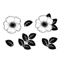 hand drawn roses flowers silhouette set with vector image