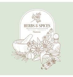 Herbs and Spices Banner vector