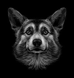 pembroke welsh corgi graphic black and white vector image