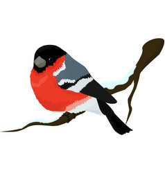 bullfinch bird winter vector image vector image