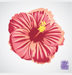hibiscus flower in pink red and yellow vector image