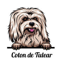 Peeking dog - coton de tulear - dog breed color vector