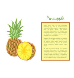 pineapple tropical plant fruit poster frame text vector image