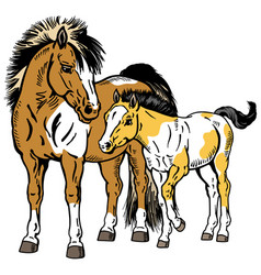 Shetland pony mare with foal vector