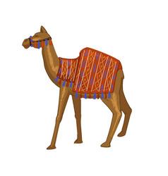 Camel animal with blanket on back egypt mammal vector
