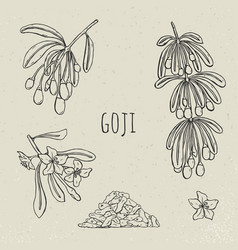 Goji on a branch hand drawn set collection vector