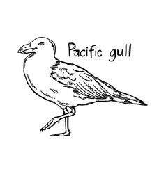 Pacific gull vector