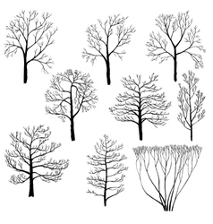 Set of winter trees vector