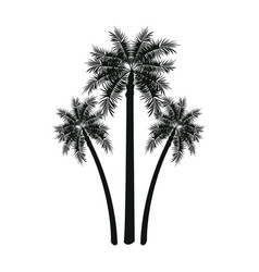 Three palm tree tropical leaves trunk vector
