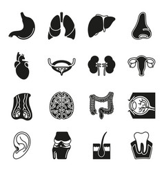 internal human organs icons set vector image