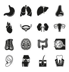 internal human organs icons set vector image