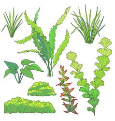 Plants for aquarium vector