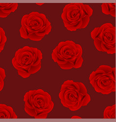 red rose on red background vector image