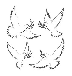 white doves with olive branch vector image