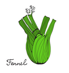 colorful hand drawn card with fennel vector image