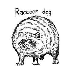 Raccoon dog vector