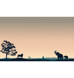 Silhouette of animals elephant lion vector image vector image