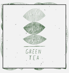 leaves and green tea vector image
