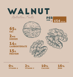 nutrition fact of walnut of hands retro style vector image