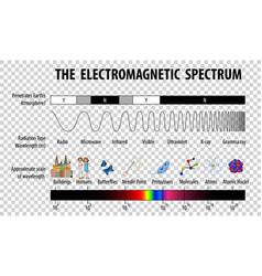 Science electromagnetic spectrum diagram on vector