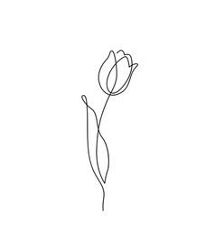 tulip flower in simple minimal vector image