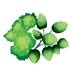 A topview green leafy plants vector