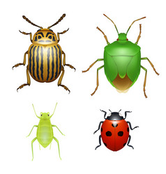 bug and beetle ladybug and aphid insect vector image