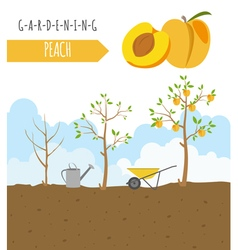 Gardening work farming Peach Graphic template Flat vector