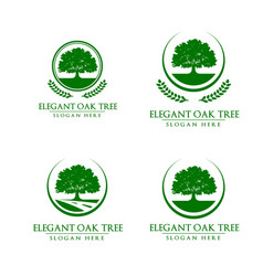 green oak tree logo design vector image