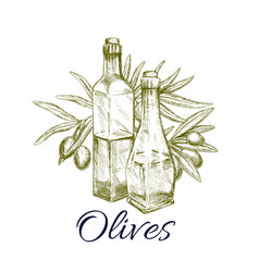 Olive oil sketch label design with branch fruit vector