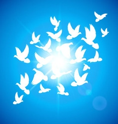 Set doves vector image